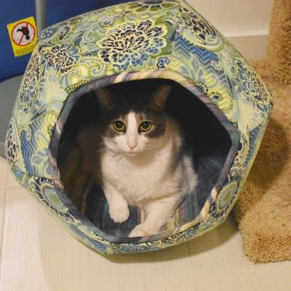 The Cat BallIMG_8489