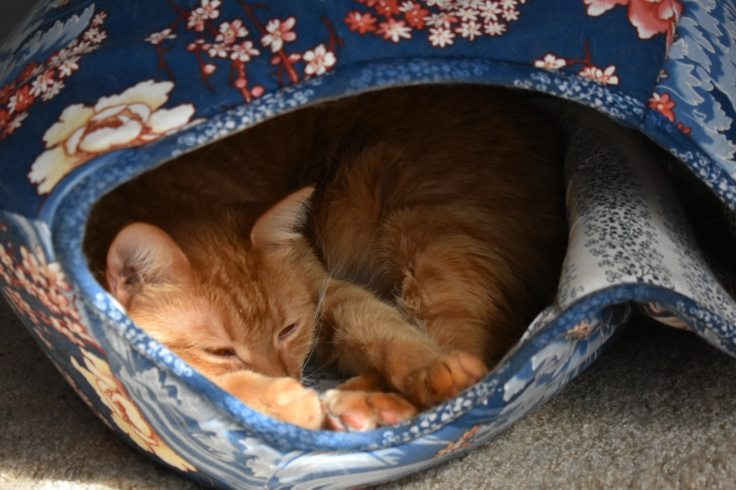 The Cat BallDSC_0021